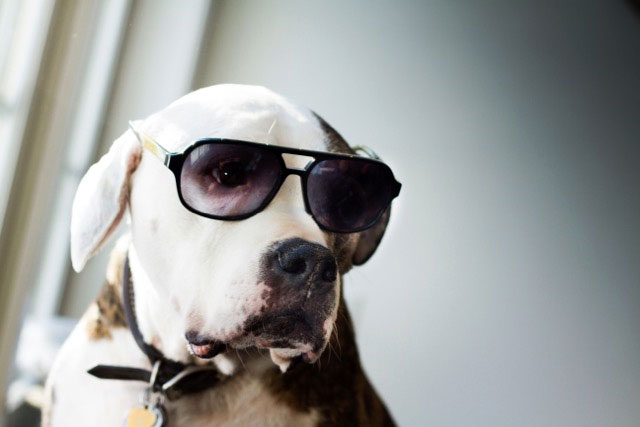 Dog Wearing Frames