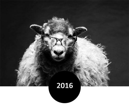 Todd Rogers Eyewear 2016